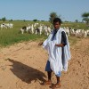 mauritania-green-sahel-shepherd-goats-4