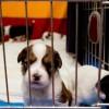 cucciolo-in-gabbia