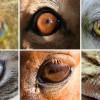 animal-eyes_wide-c0e3de69f408d53b9ee8234c6ce62a781084cb55-s900-c85