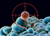 cancer_stem_cells
