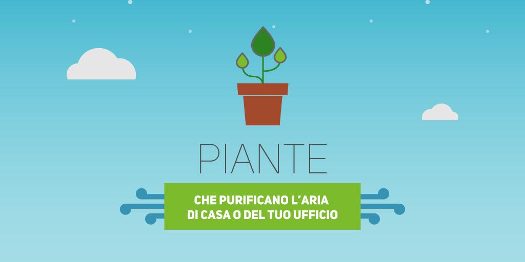Piante contro l inquinamento in casa che puliscono l aria interna e che sono facili da coltivare - Piante da casa che purificano l aria ...