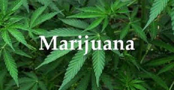 Microsoft investe nella marijuana: nuovo progetto in arrivo