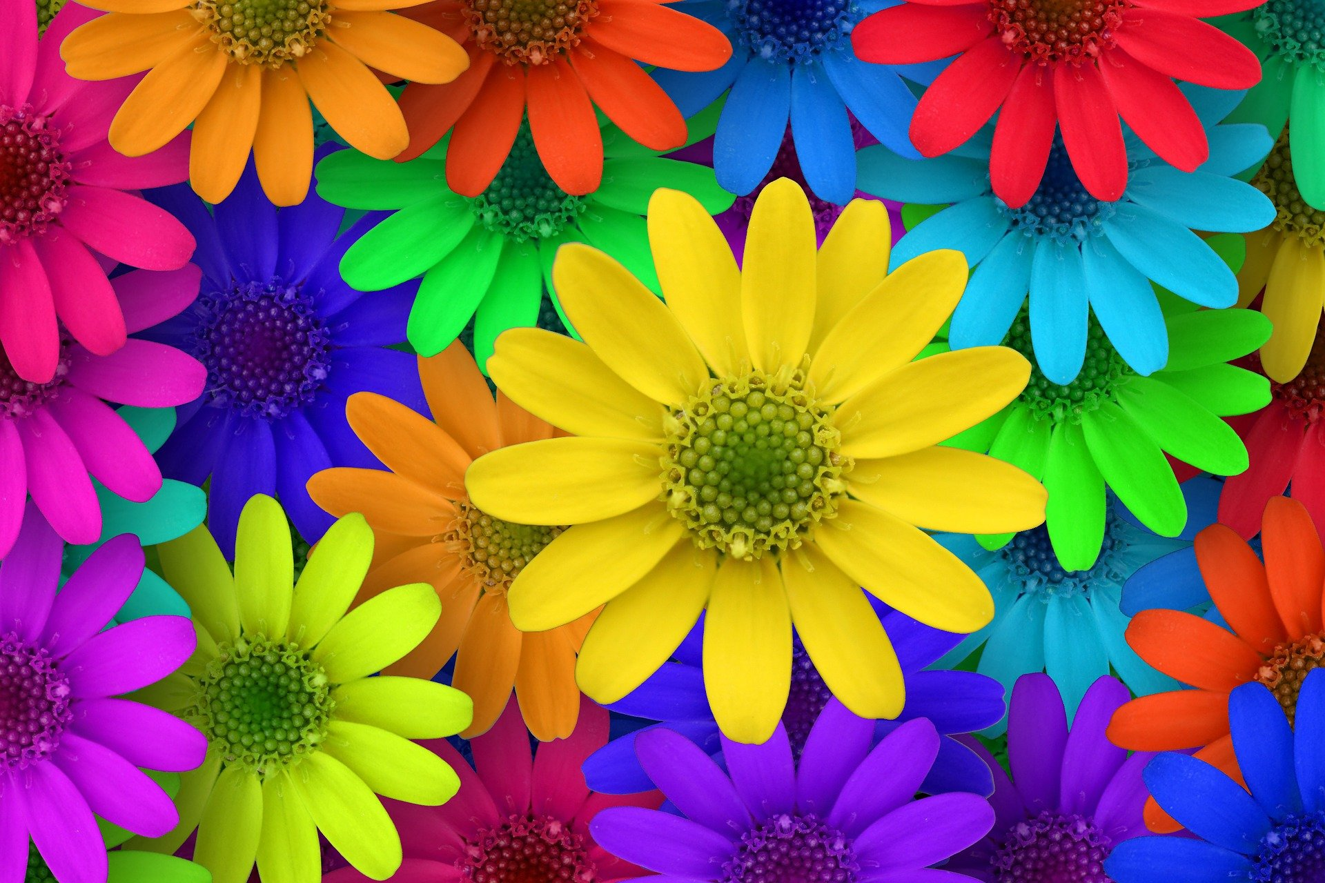 Il significato segreto dei fiori