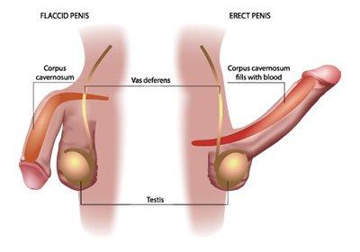 operazione per allungare il pene